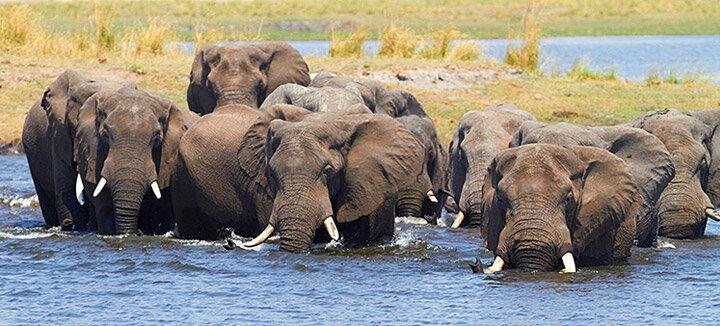 Reisaanbiedingen Botswana