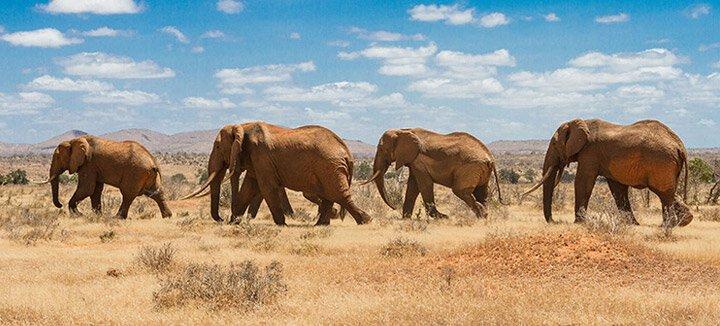 Reisaanbiedingen Kenia