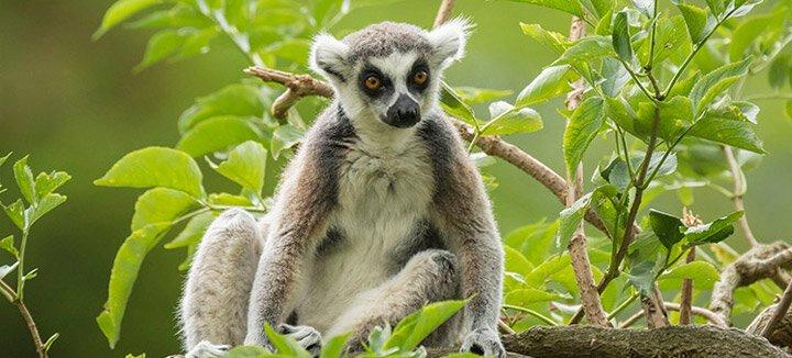 Vliegtickets Madagaskar