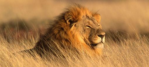 Reisaanbiedingen Namibië