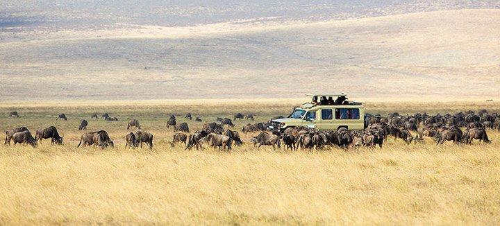 Reisaanbiedingen Tanzania