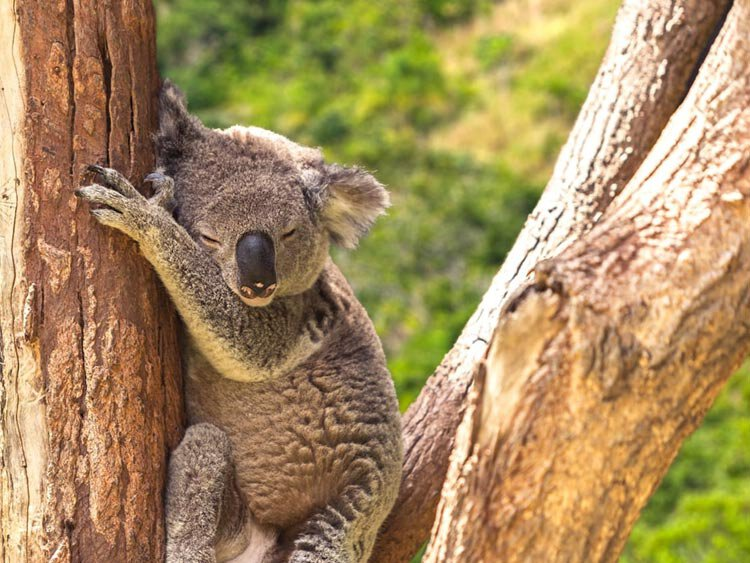 Privé rondreis met huurauto Oostkust Australië