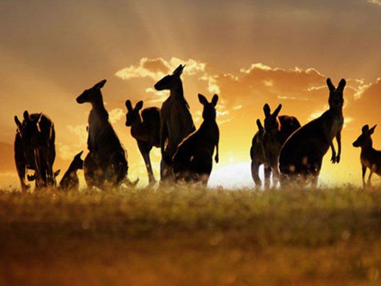 Privéreis Mooiste van Australië