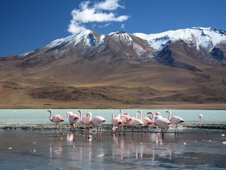 Noord-Argentinië & Bolivia (Altiplano)