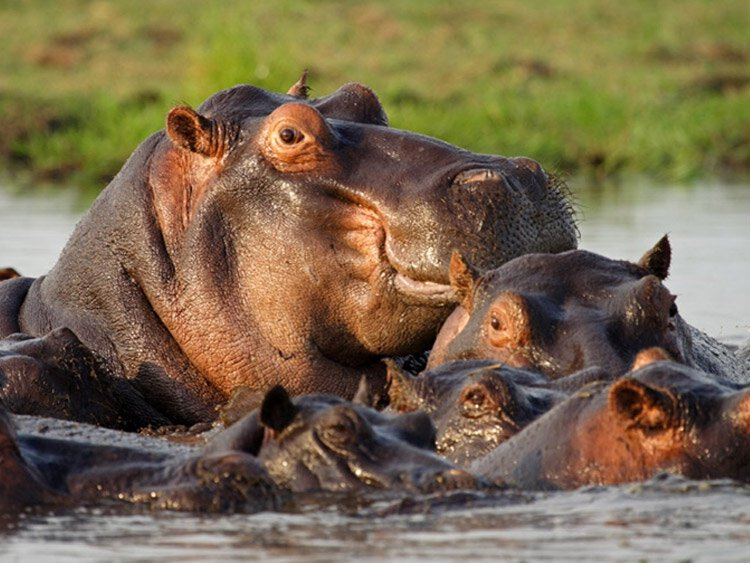 Internationale Kampeerreis Botswana 'Natuur op zijn best'