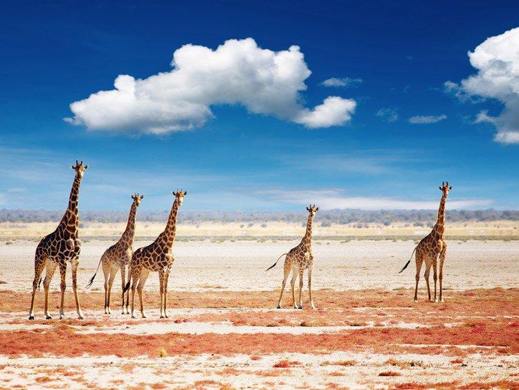 Privéreis Namibië en Botswana