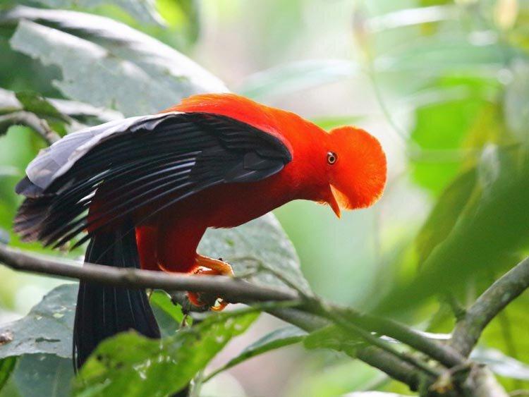 Colombia - Vogel- en natuurreis