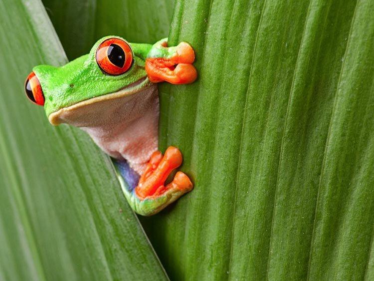 Hoogtepuntenreis door Costa Rica
