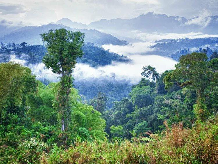 Ecuador: Jungle & vulkanen