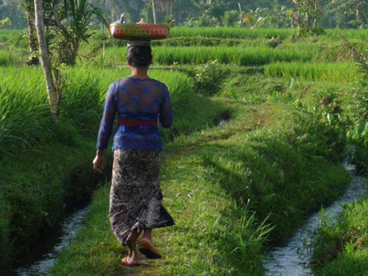 Rondreis Bali's bergen en kusten