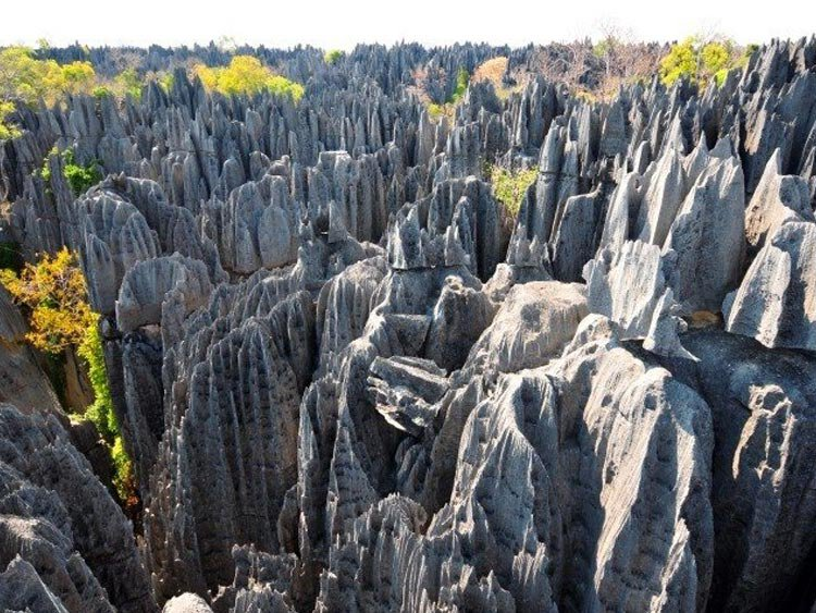 Madagascar Experience