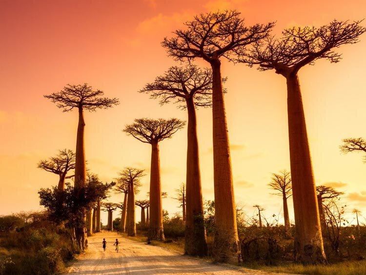 Madagaskar hoogtepunten