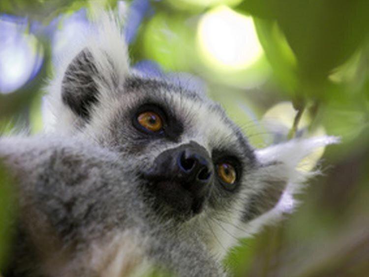 Regenwoud, baobabs, lemuren en walvissen in Madagaskar