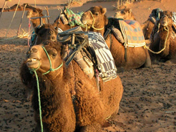 Marokko rondreis lokaal geregeld en betaalbaar
