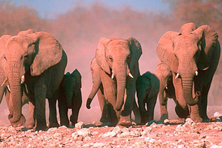 Namibië rondreis de leukste