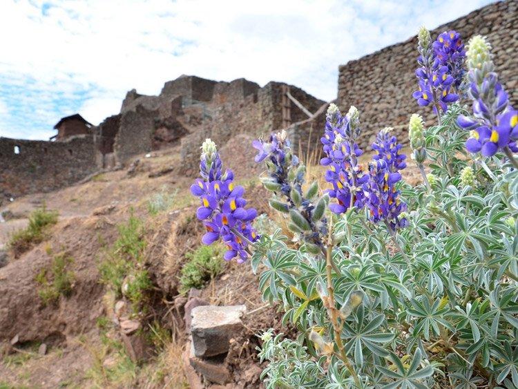 Wandelreis Colca Canyon en Incatrail