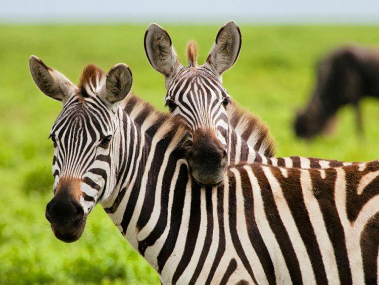 Tanzania hoogtepunten rondreis