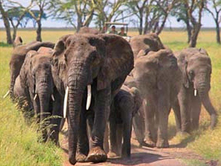 Savanne, Safari & Zanzibar