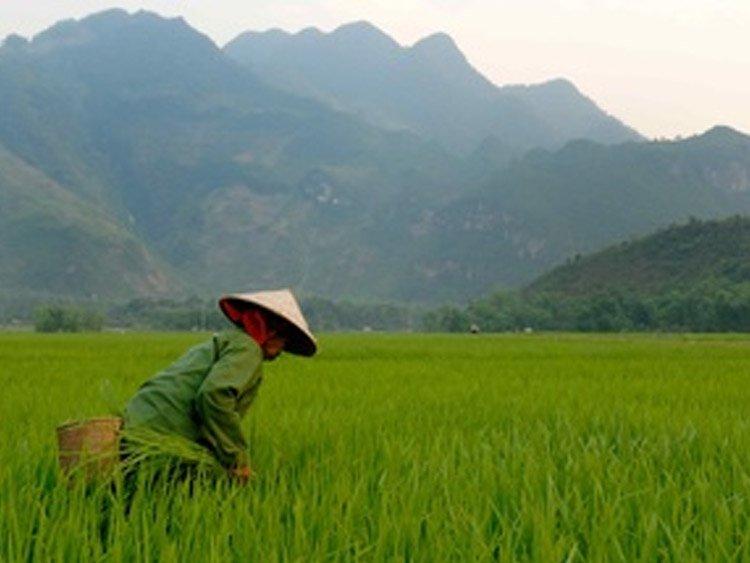 Vietnam rondreis lokaal geregeld