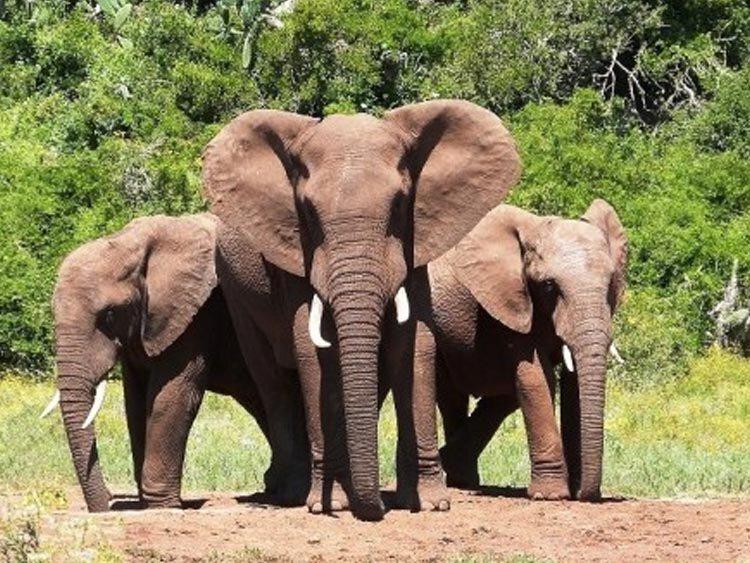 Rondreis 'Baie Mooi' Zuid-Afrika
