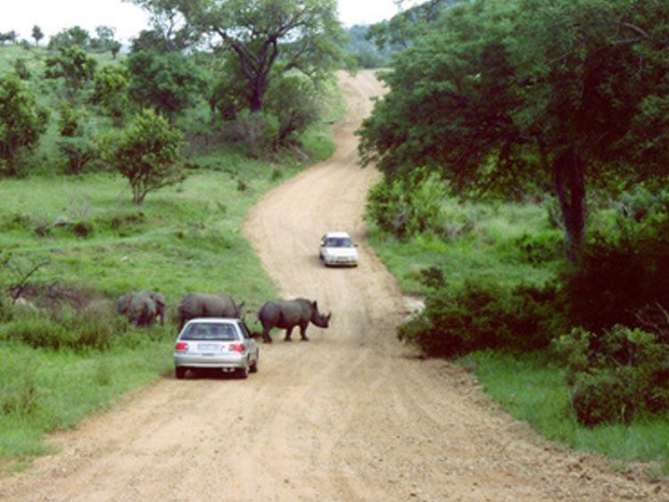 Zuid-Afrika rondreis: lokaal geregeld en betaalbaar