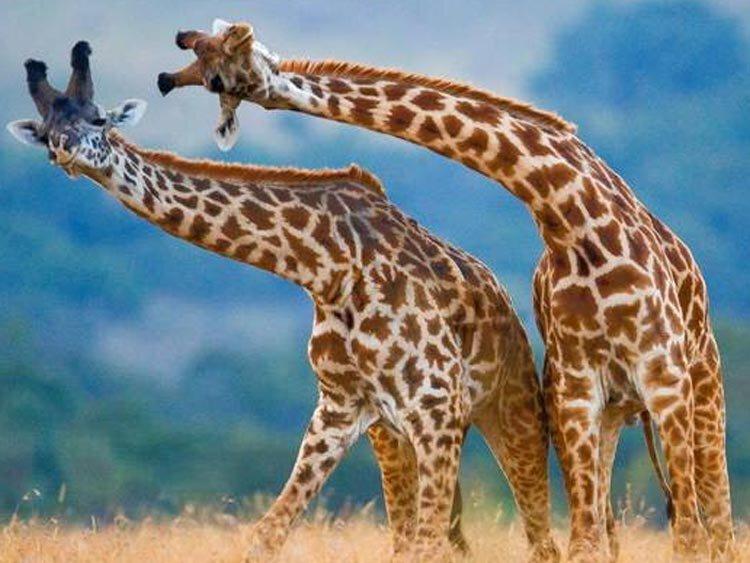 Rondreis Tuinroute en Krugerpark