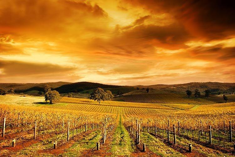 Wijngaarden in Australië