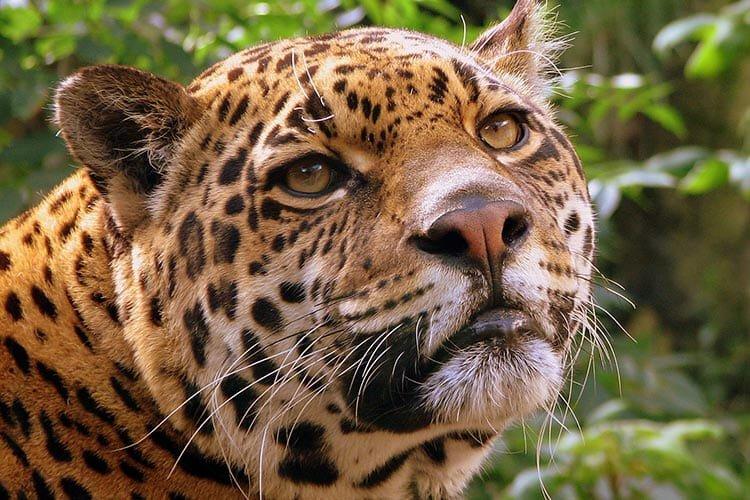 Jungle & wildlife