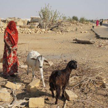 Jaisalmer - Thar woestijn