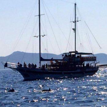 Tijdens boottocht dolfijnen gespot