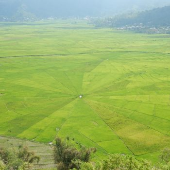 Spiderweb rice fields