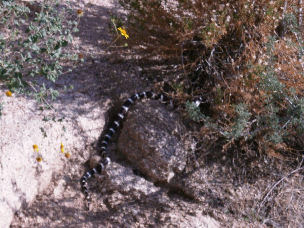 Een slang langs de Barker dam trail.