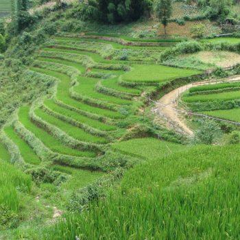 Rijstterrassen bij Sapa