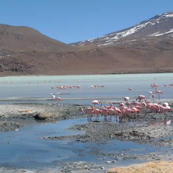 Laguna Hedionda (3 daagse jeeptour- Salar de Uyuni)