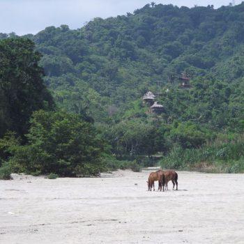 Het hostel vanaf de Monkey Walk