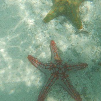 Zeesterren tijdens de blue lagoon excursie