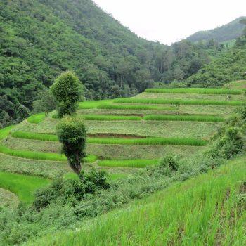 Thailand Jungletrekking. Tussen de rijstvelden. Amazing!