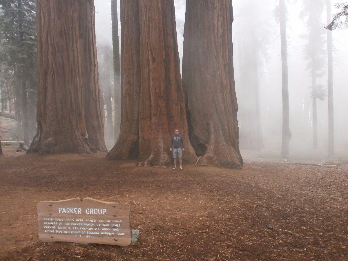 The parker group. Wat een enorm grote bomen!