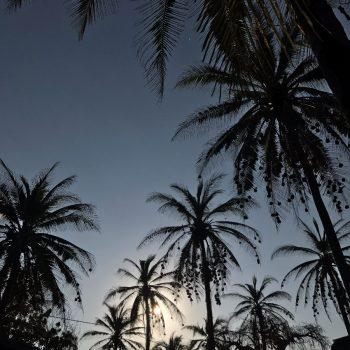 Palmbomen en strand
