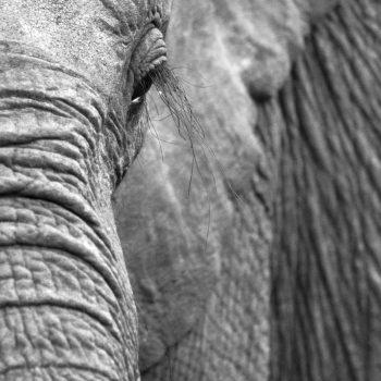 David Sheldrick´s Elephant Orphanage