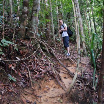 een junglepad in de taman negara