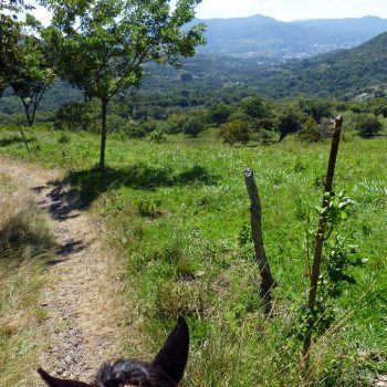 Paardrijden bij Selva Negra lodge