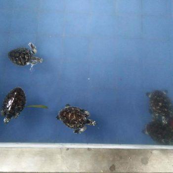 Schildpadden opvang