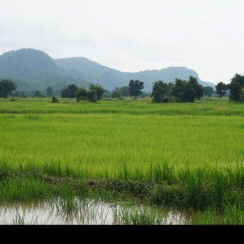 Platteland Battambang, prachtige rijstvelden!