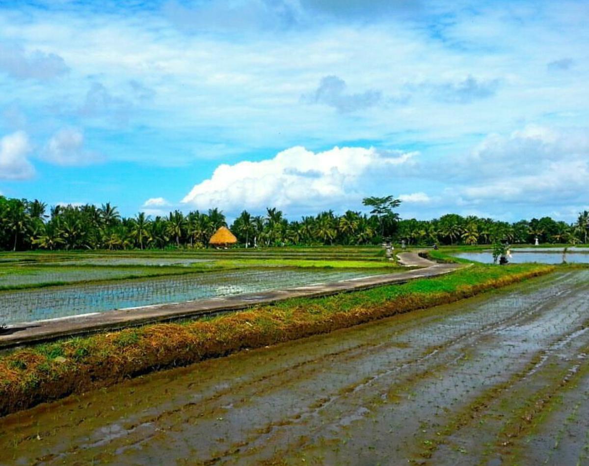 Rijst terassen in Ubud