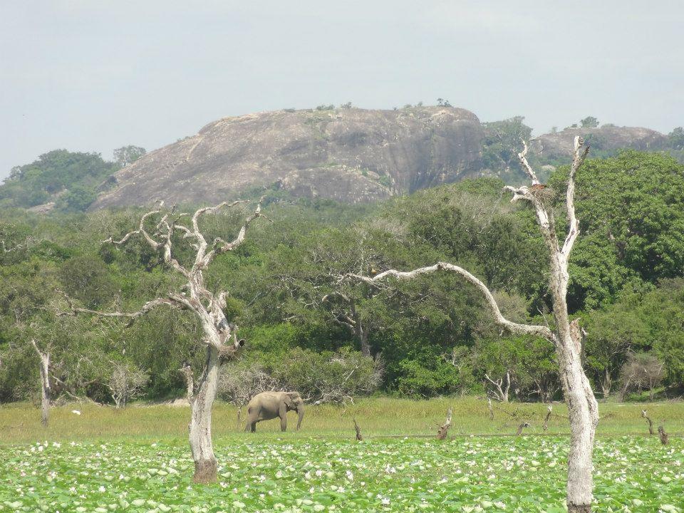 Yala National Park, Elephant Rock