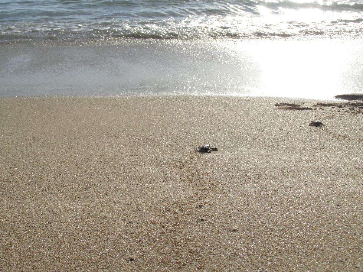 Bali Sea Turtle Society