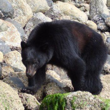 beren kijken per boot excursie