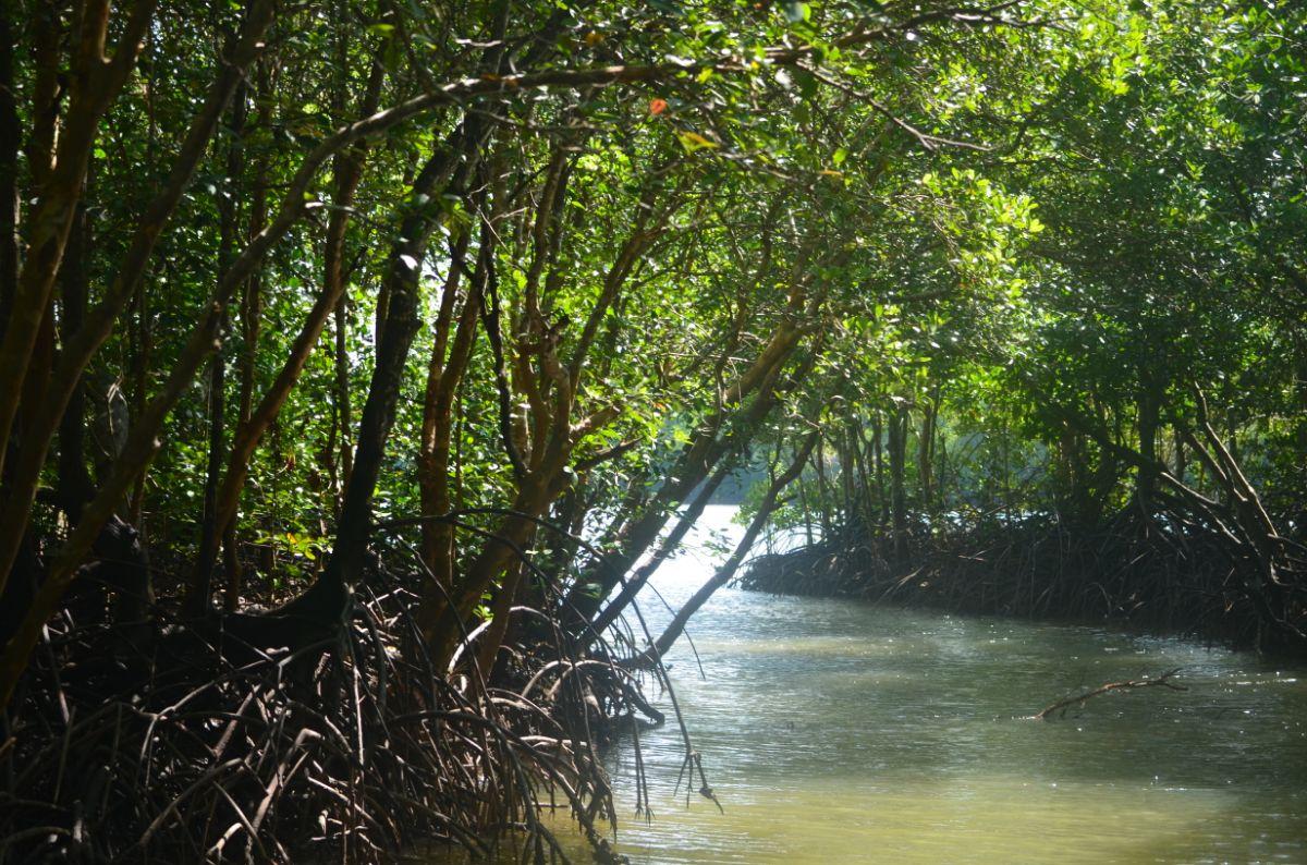 Krabi mangrove. Ontzettend mooi.