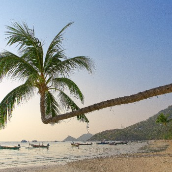 Beeldbepalende palmboom